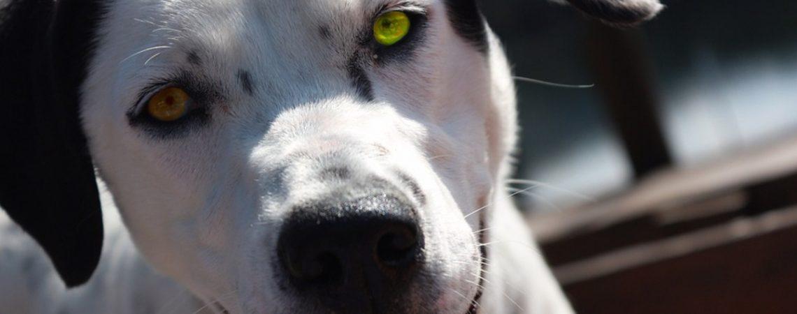 3° Giornata da Cani Nevianese.